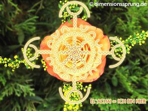 Meditationskarte / Energiesymbolkarte<BR />EL'ACHAI - Ich bin hier (Jesus)