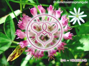 Meditationskarte / Energiesymbolkarte<BR/>ENA - Vergebung