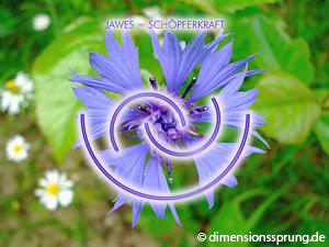 Meditationskarte / Energiesymbolkarte<BR/>JAWES - Schöpferkraft