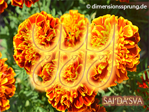 Meditationskarte / Energiesymbolkarte<BR/>SAI'DA'SVA - 4. Chakra